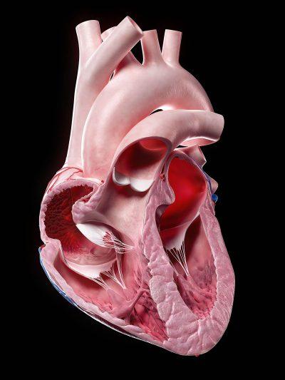 SciePro Heart
